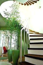 best large indoor plants tall houseplants for home and offices within decor house uk flowers