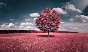 most beautiful wallpaper download. Interesting Most Most Beautiful Tree Wallpapers  Download HD Photos For Wallpaper E