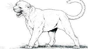 mountain lion coloring page color
