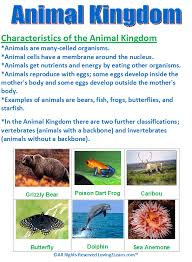 Super Subjects Super Science Life Science Kingdoms Animal