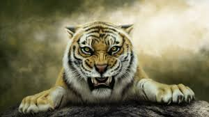 s tiger wallpaper