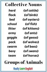 Chart Of Collective Noun Collective Nouns Group Nouns