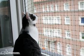 Fenstersicherung Für Katzen Ohne Bohren Diy