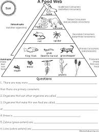 food web pyramid pin by matty john on ecology science ecology ecological pyramid