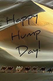 56344260 Happy Hump Day
