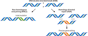 Genome Editing Genome Editing Technology Overview