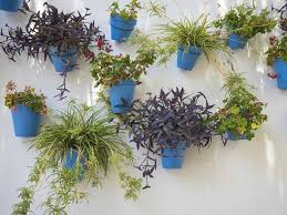 individual colourful pots can liven up a plain wall balcony planters