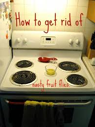 Small Flies In Kitchen How To Get Rid Of Fruit Flies Cute Diy Projects