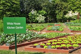 White House Kitchen Garden A First Lady Forges A Local Food Legacy Smartbrief