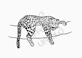 Disegni Manga Facili Da Copiare Vari Disegni Da Colorare Animali