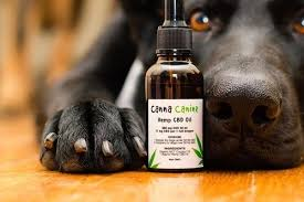 Image result for cbd oil for pets