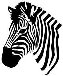 Small Picture 20 best zebras images on Pinterest Animals Zebras and Wild animals