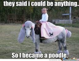 horse memes | Poodle Horse Meme Center | Projects to Try ... via Relatably.com