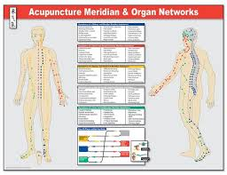 Acupuncture Chart Poster Meridian Pathways And Organ Networks Poster Acupuncture
