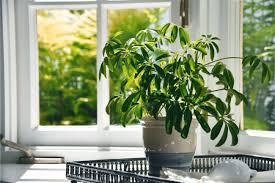 11 best indoor plants for hot rooms