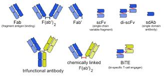 List Of Therapeutic Monoclonal Antibodies Wikipedia