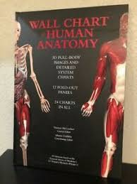 Wall Chart Of Human Anatomy Details About Wall Chart Of Human Anatomy 3d Full Body Images 24 Charts 12 Fold Out Panels
