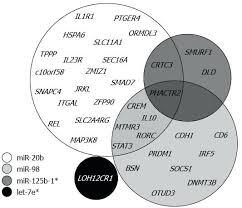 Three Venn Diagram Pdf Four Overlapping Circles Common Process Diagram Com Circle