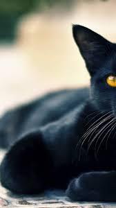 Iphone Black Cat Wallpaper Hd