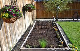 vegetable gardening in raised beds