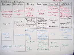 Macromolecules Chart Ap Biology 67 Accurate Biological Macromolecules Chart