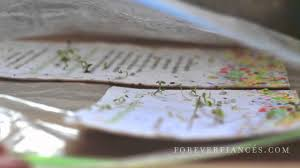 seeded paper wedding invitations by foreverfiances you