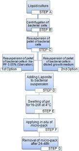Flow Chart Of Medieval Period Flow Chart Of The Biocleaning Procedure Download