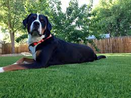 artificial grass dog urine smell