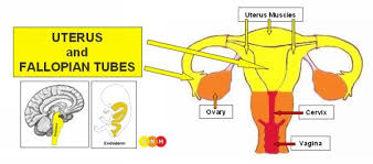 Dr Hamer Disease Chart Pdf Female Sexual Organs