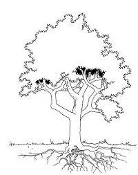 Kids N Fun Kleurplaat Bomen En Blaadjes Boom En Wortels