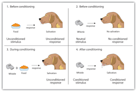 Example Of Classical Conditioning Objective 14 Introduction To Psychology Portfolio