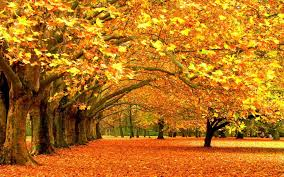 fall nature backgrounds. Fall Background Nature Backgrounds E
