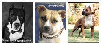 Types Of Pitbulls Chart Pit Bulls Against Misinformation What Is A Pit Bull