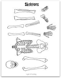 ead91741486a85c32a0bb984d6c4afe8 school plan a skeleton 253 best images about science on pinterest activities on slide flip turn worksheet