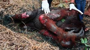 Risultati immagini per multinazionali olio palma