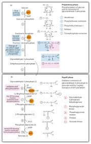 20 5 Stage Ii Of Carbohydrate Catabolism Chemistry Libretexts