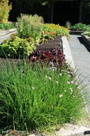 converting lawn into raised garden beds