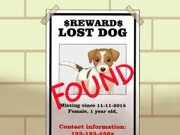 Lost Dog Flyer Template Word Lost Dog Poster Maker Cityesporaco 7