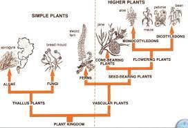 Plant Kingdom Classification Chart For Kids Plant Kingdom Classification Plant Classification
