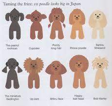 Standard Poodle Color Chart Www Bedowntowndaytona Com