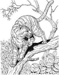 Printable Snow Leopard Coloring Page 8 Haljinezamaturu