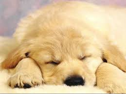 most beautiful dogs wallpapers. Contemporary Wallpapers Dog Wallpapers And Most Beautiful Dogs The MOST Wallpapers