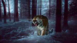 Wallpaper White Tiger, Felidae, Lion ...