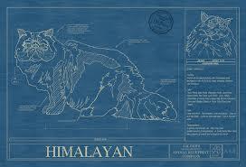 himalayan cat art blueprint wall art