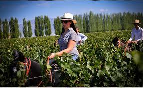 Картинки по запросу mendoza wineries