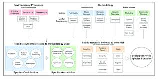 Coral Classification Chart Flow Chart Of Suggested Process To Inform Ecological Roles