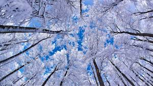 winter mac backgrounds free download download mac winter wallpaper which is under