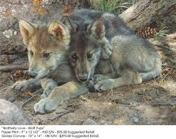 brotherly love wolf pups carl brenders