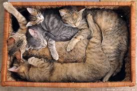 A cat box.