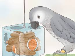 Parrot Diet Chart How To Feed An African Grey Parrot 12 Steps With Pictures